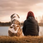 Coronavirus : boom des abandons d'animaux en France