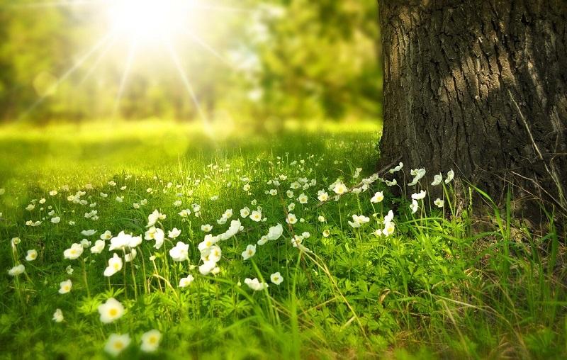 Nature anti stress